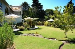 armadillo-garden1